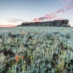 Castle Rock, wildflowers and fringed sage at sunrise, Vermejo Park Ranch, New Mexico, USA.